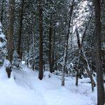 La forêt guérisseuse